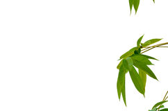 Деталь изолировала листья Стоковое Фото