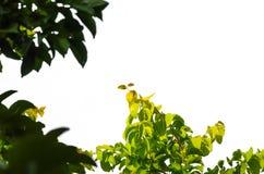 Деталь изолировала листья Стоковая Фотография