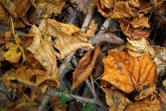 Деталь листьев осени Стоковая Фотография RF
