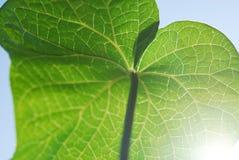 Деталь листьев Стоковые Изображения