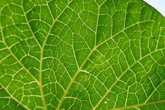 Деталь листьев Стоковые Фотографии RF