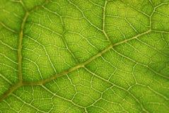 Деталь листьев Стоковое Изображение