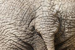 Деталь кожи слона стоковые фото