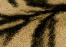 Деталь кожи тигра Стоковая Фотография RF