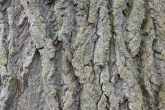 Деталь коры дерева Стоковая Фотография RF