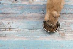 Деталь красного кота есть от шара на голубых деревянных планках Стоковое Изображение RF