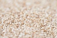 Деталь макроса семян сезама Стоковые Фотографии RF