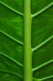Деталь на цветке зеленых лист тропическом азиатском Стоковые Фотографии RF
