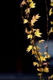 Деталь лозы дерева и листья в традиционном китайские садовничают, Сучжоу, Китай Стоковая Фотография