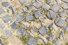Деталь дороги булыжника Стоковые Фотографии RF