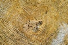 Деталь отрезка древесины Стоковые Изображения RF