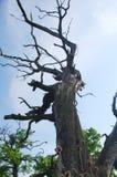 Деталь от отзолаalinac Å около городка Smederevo в Сербии с старыми деревьями дуба стоковые фото