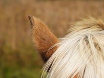 Деталь лошади (33) Стоковая Фотография RF