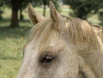 Деталь 109 лошади Стоковые Изображения