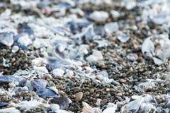 Деталь пляжа раковины и песка Стоковые Фото
