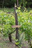 Деталь работы традиции виноградника стоковые изображения rf