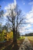 Деталь старого дерева в парке Стоковое Изображение RF