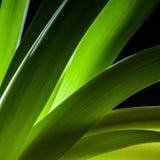 Деталь стержня зеленого растения Стоковые Фото
