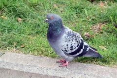 Деталь с птицами, голубями Стоковая Фотография RF