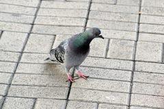 Деталь с птицами, голубями Стоковые Фото