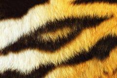 Деталь текстуры меха тигра Стоковое Изображение RF