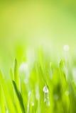 Деталь травы стоковое фото