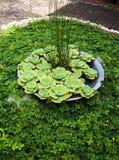 Деталь тропического сада в Boracay Стоковые Изображения