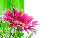 Деталь фиолетовой маргаритки Стоковые Фото