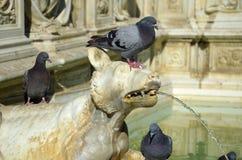 Деталь фонтана Gaia от Сиены, Италии Стоковое Изображение