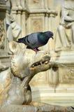 Деталь фонтана Gaia от Сиены, Италии Стоковое Фото