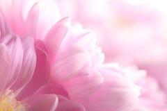 Деталь цветка Стоковые Фото