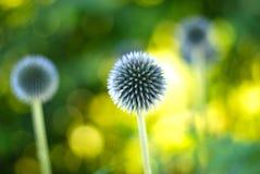 Деталь цветка Стоковые Фотографии RF