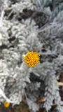 Деталь цветка Стоковое Изображение RF