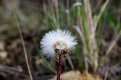 Деталь цветков Стоковые Изображения