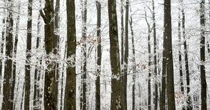 Деталь Forrest стоковое изображение rf