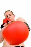 детеныши боксера мыжские Стоковое Изображение