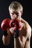 детеныши боксера Стоковое фото RF