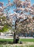 детеныши вала весны magnolia пар романтичные Стоковые Изображения RF