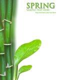детеныши вала зеленого завода смоквы Стоковые Изображения