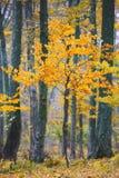 детеныши вала листва Стоковое фото RF