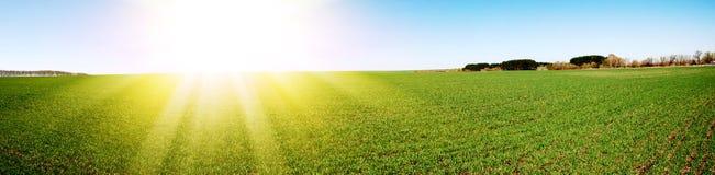 детеныши весны зеленого завода стоковое фото rf