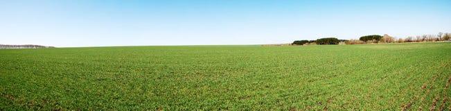 детеныши весны зеленого завода стоковые фотографии rf