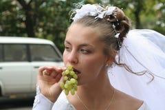 детеныши виноградины невесты Стоковое фото RF