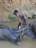 детеныши воды мыть буйвола мальчика Стоковые Фотографии RF