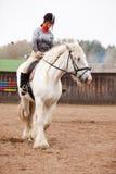 детеныши женщины графства riding лошади Стоковое Фото