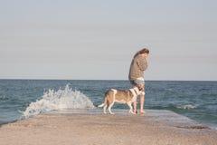 детеныши женщины griffon собаки breed bruxellois Стоковое Изображение RF