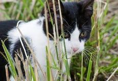 детеныши котенка крупного плана стоковое фото rf