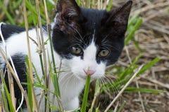 детеныши котенка крупного плана стоковые изображения rf