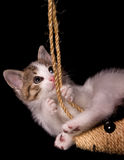 детеныши котенка Стоковое Изображение RF