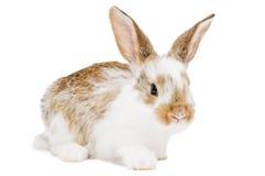 детеныши кролика младенца одного Стоковые Фотографии RF